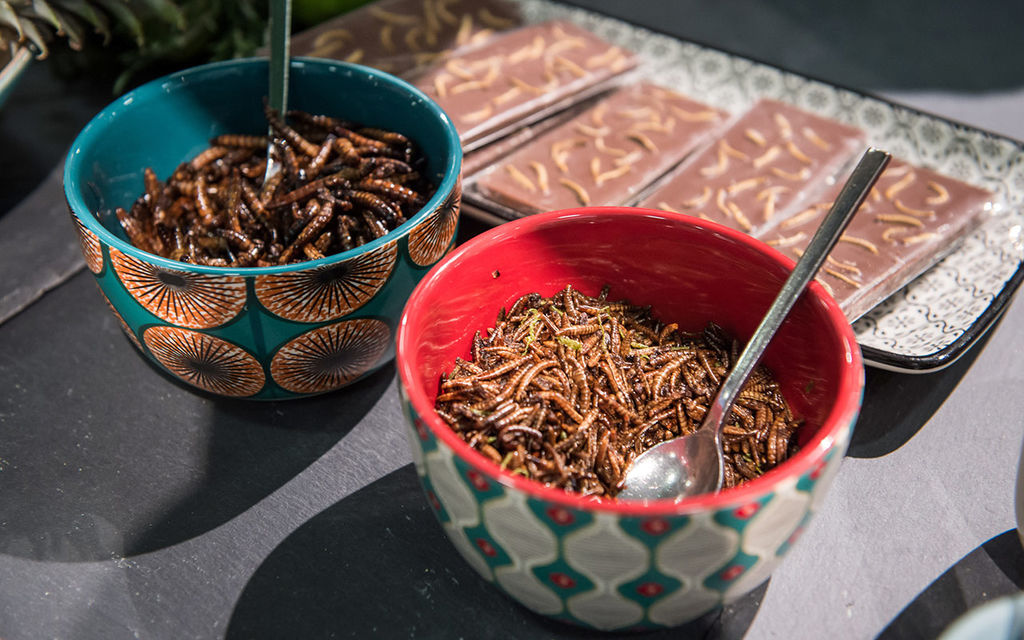 Edible bugs - the new beef?