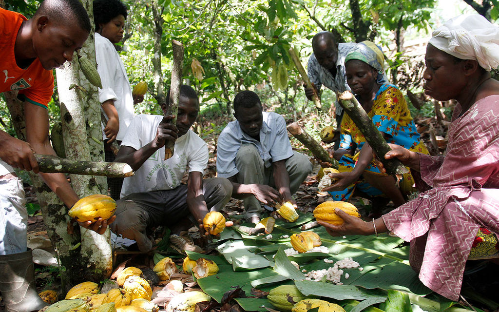TOWARDS A SUSTAINABLE COCOA SECTOR