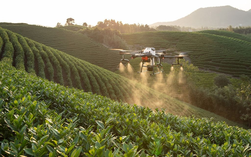 Debate: Pesticides – a blessing or a curse?