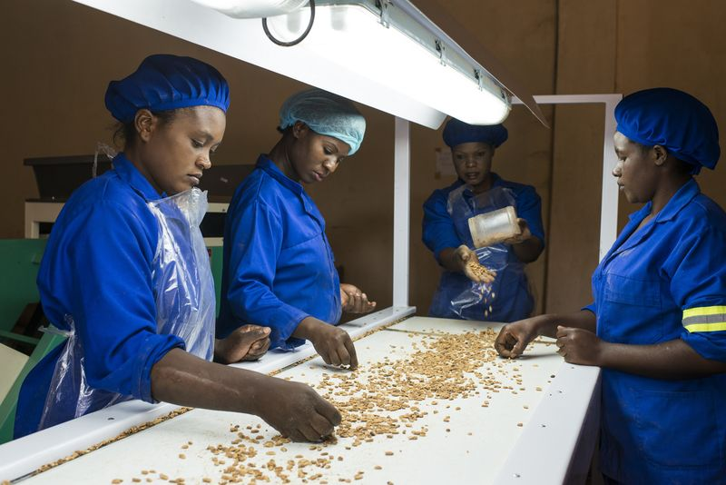 Zambia, Chipata, COMACO Processing of peanuts from contract farmers, sorting of roasted peanuts. © Jörg Böthling, GIZ