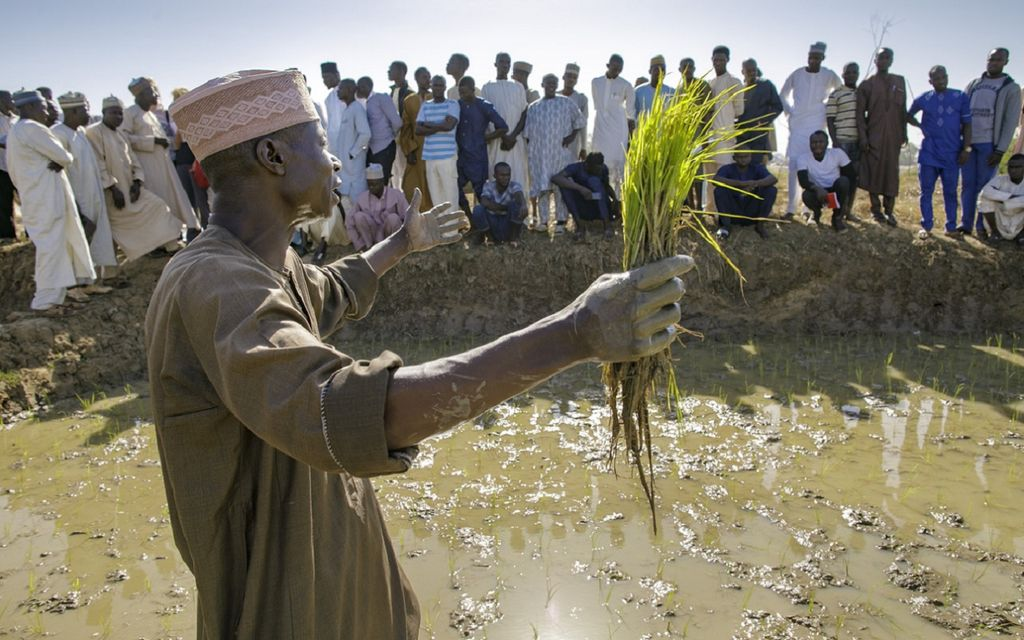 Turning many into one: CGIAR network restructures