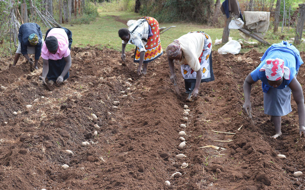 STRONG TUBERS: SUPPORTING POTATOE FARMERS