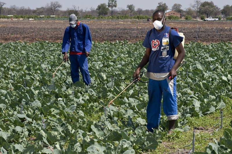 Pest control on a vegetable field in Namibia © Ralf Bäcker, GIZ