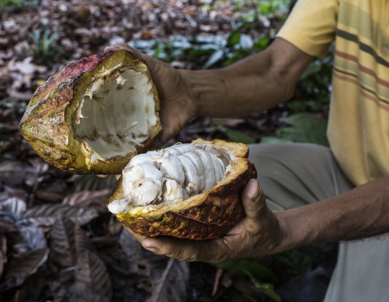 Over 60% of global cocoa production comes from a few countries in Western Africa. © Leslie Searles, GIZ