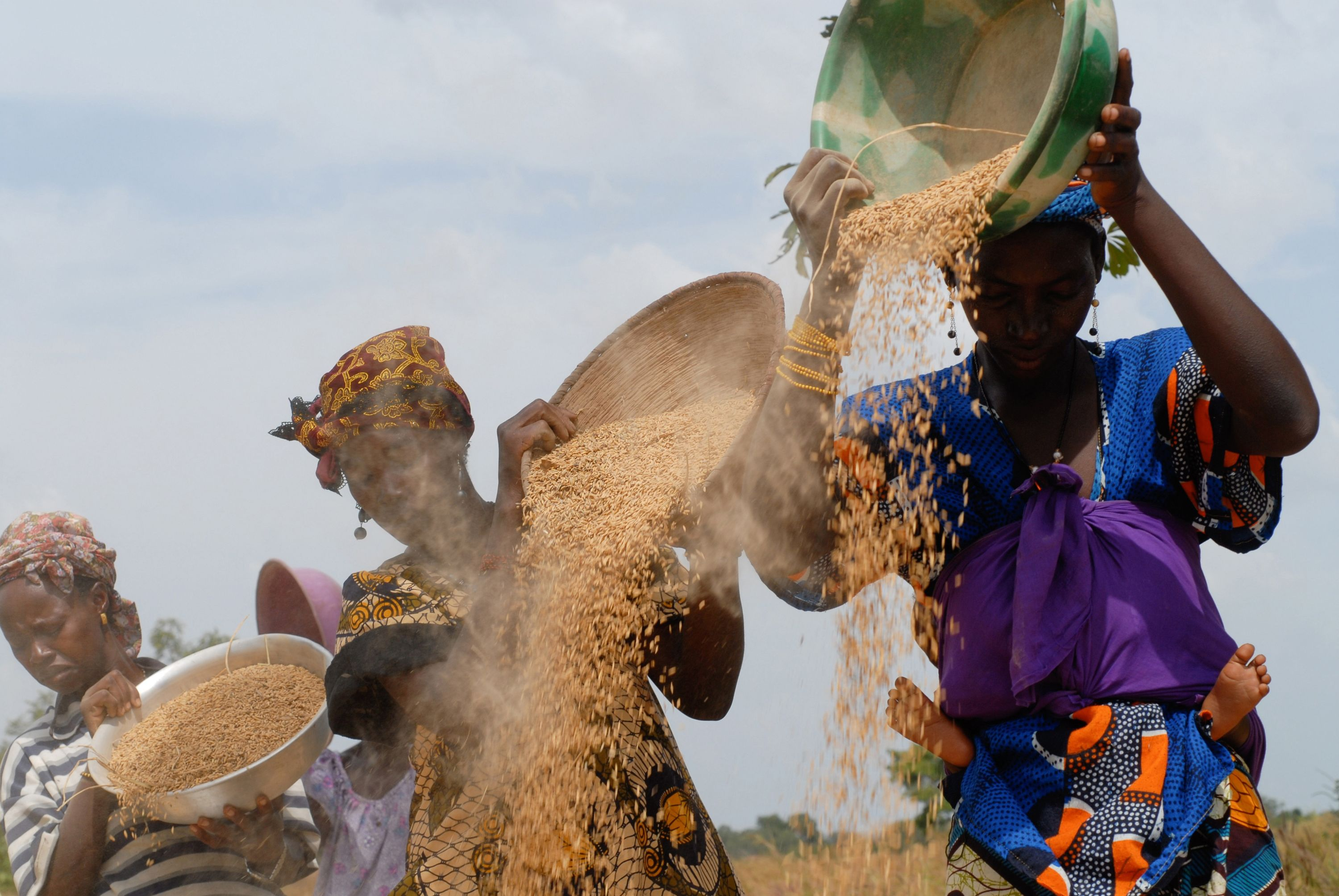 Women thresh rice and separate the chaff from the grain in the village of Banankoro Mali. Photo: Joerg Boethling, GIZ