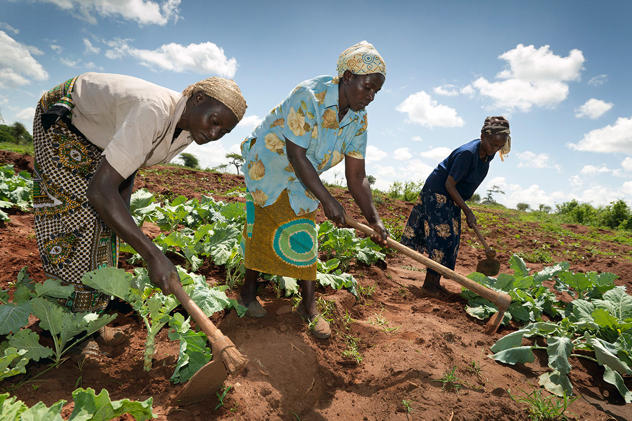 Zambia: Women farmers in their maize field with improved, climate-adapted cultivation methods. Photo: WWF Germany